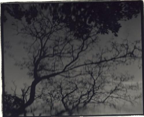 Julia Gragnon cerisiers