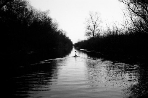 Ljubisa Danilovic swan lake