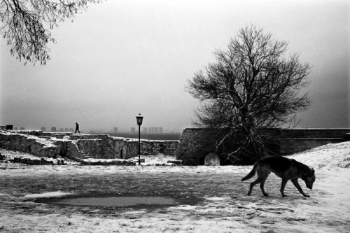 Ljubisa Danilovic dog in snow