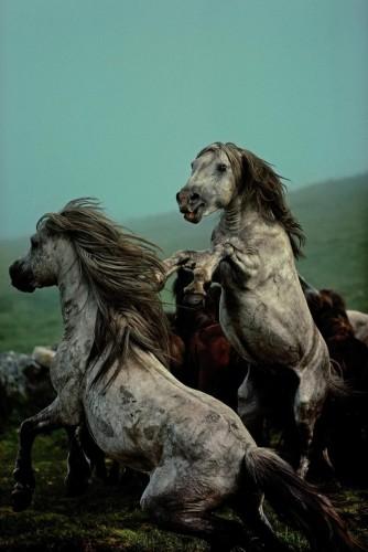 David Alan HArvey Wild Horses, Galice, Espagne, 1977,