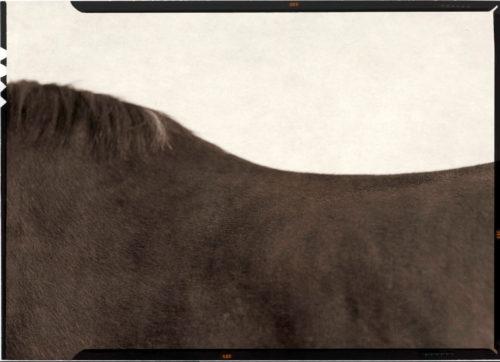 JEFFERSON HAYMAN, HORSE, ÉTAT DE NEW YORK, 2016