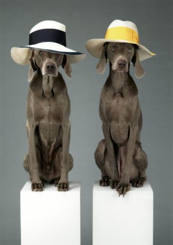 WILLIAM WEGMAN, HAT DOGS, 2013